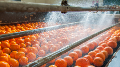 The Effect of Supply Chain Crisis on the Food Industry
